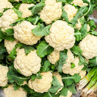 Fresh organic cauliflower background.