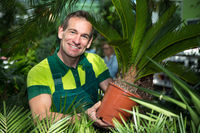 Gardener presenting potted palm tree at nursery or garden center