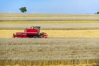 Combine harvester working in a wheat field