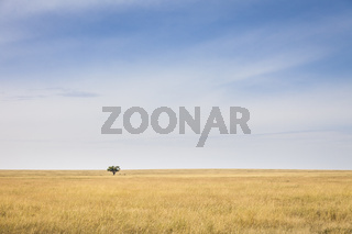 Serengeti