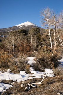 High Mountain Peak Great Basin Region Nevada Landscape Elk Antlers