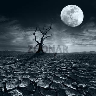 Lonely dead tree at full moon night at desert