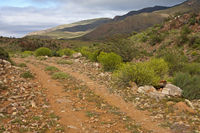 Rough road in the Nama Karoo shrubland,