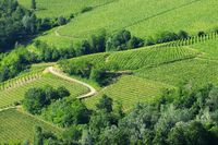 Langhe Weinberge - langhe vineyards 07