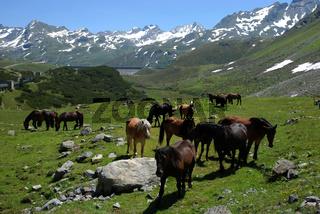 Alpenpanorama im Montafon, Silvretta,