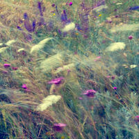 Abstract floral background in vintage style. Wild flowers and grass mowing at windy summer field. Watercolor effect
