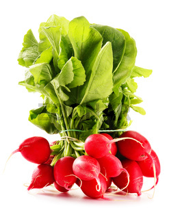 Bunch of radish isolated on white background