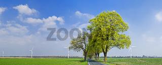 Allee und Windraeder bei Freudenberg, Landkreis Maerkisch-Oderland, Brandenburg