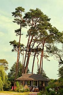 Gartenhaus / summerhouse
