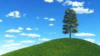 Der Baum auf dem Berg