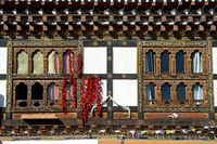 Red paprika hanging for drying at a window, Bhutan