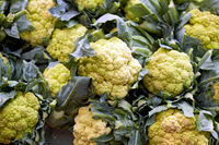 Fresh cauliflower sold at a market