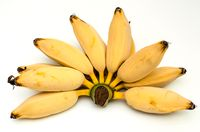 Gluai Hak Muk banana varieties of Thai (Musa)