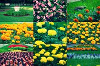 Set of different flowers of spring flowerbed, collection of images