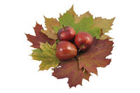 apple and autumn foliage