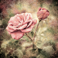 Grunge texture with floral background in vintage style. Romantic pink roses flowers with water drops