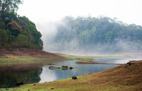 India Kumily, Kerala, India - National park Periyar Wildlife Sancturary,