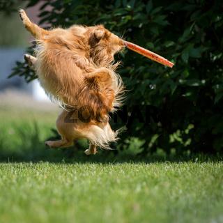 Akrobatisches Sprung