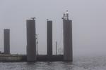 Schiffsanleger im Hamburger Hafen bei Nebel, Deutschland