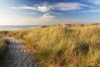 Dünen am Strand von Sylt