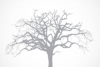 Bare old dry dead tree silhouette without leaf - oak crown