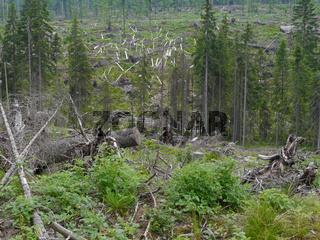 Waldlandschaft Sumava Nationalpark Böhmerwald
