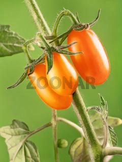 Yellow tomatoes