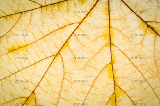 Autumn leaf texture