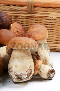 The boletus edulis isolated on white