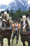 Pferde mit Führer in Bayern