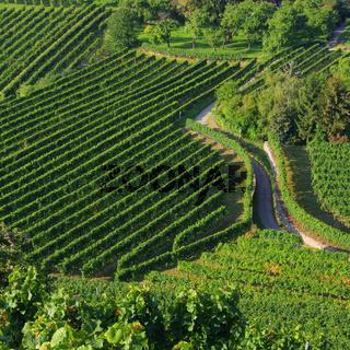 Wachau Weinberg - Wachau vineyard 17