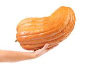 Fresh shining pumpkin on a hand.