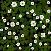 Clover on black background