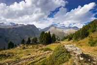 Riederfurka and Aletsch Forest, Switzerland