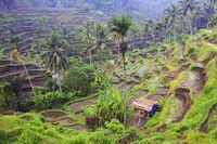 Reisterassen bei Tegallalang, Bali, Indonesien