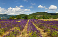 Provence. France.