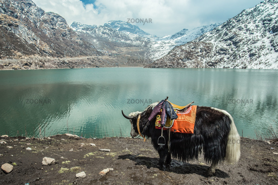 Yak Tsangmo Lake in Sikkim India