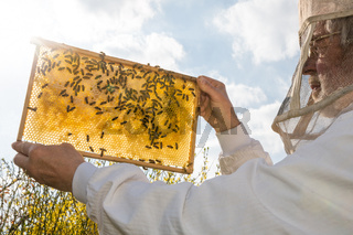 Beekeeper holds honeycomb of a beehive against the sun