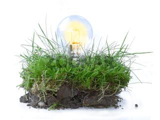 Glühbirne in einem Stück Gras, Symbol für erneuerbare Energie, nachhaltig, isoliert