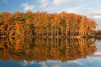 Herbstwald spiegelt sich in Teich