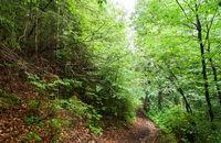 Trekking trail leading through summer landscape of deep highland forest at Carpathian mountains. Ukraine destinations travel background
