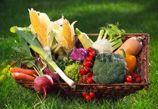 Fresh vegetables in the basket