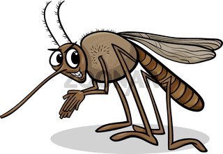 mosquito insect cartoon illustration