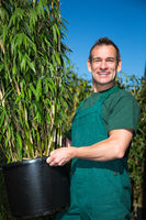 Gardener posing with potted bamboo plant at nursery