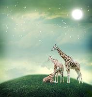 Three giraffes on the fantasy landscape