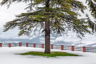 Tree on the lawn covered with snow.