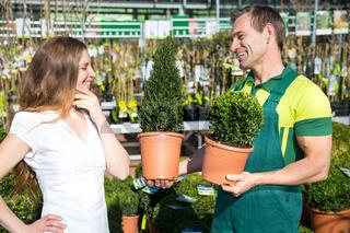 Gardener at garden center or nursery presenting boxtrees to customer