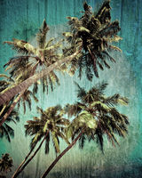 Grunge tropical background with coconut palm tree. Image in vintage style