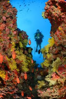 Korallenriff mit Weichkorallen und Taucher,  Coralreef with soft coral and scuba diver, Malediven, Maldives