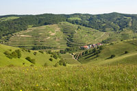 vineyards near Schelingen, Kaiserstuhl region